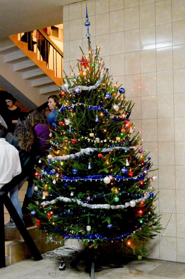 Keszthely Pannon Egyetem Georgikon Karának fája